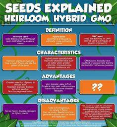 Seeds Explained Heirloom vs. Hybrid vs. GMO
