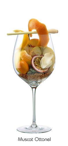 MUSCAT OTTONEL Apple, pear, grapefruit (shell), kumquat, orange (peel), mandarin, almond, peach, passion fruit, quince, rose (white), lemongrass, pistachio, praline