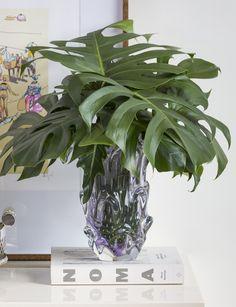 Um arranjo monocromático, feito por Marcinho Leme, da Milplantas, apenas com costela-de-adão em um vaso de Murano lilás maravilhoso da Tania Bulhões.