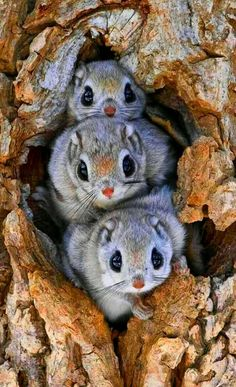 Whatever these animals are, they are the cutest ever. Such big eyes and little e - Animals wild, Animals cutest, Animals funny, Animals drawings Beautiful Creatures, Cute Creatures, Animals Beautiful, Cute Funny Animals, Cute Baby Animals, Cute Small Animals, Nature Animals, Animals And Pets, Wild Animals