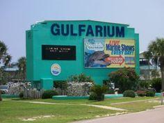 Gulfarium in Fort Walton Beach, FL. Our FAVORITE spot for entertainment at the beach :)