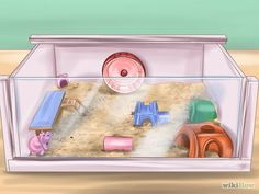 How to Care for Roborovski Hamsters. Roborovski dwarf hamsters are fun-loving, fast, and adorable miniature creatures that usually grow to be four to six centimeters in length. Robo Dwarf Hamsters, Robo Hamster, Hamster Food, Hamster Habitat, Funny Hamsters, Hamster Care, Hamster House, Roborovski Hamster, Playpen
