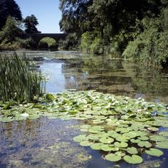 Bosherston Lily Ponds at Stackpole, Pembrokeshire. Take the beautiful walk all the way through to the beach!