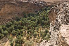 Mauritania Adrar Aoujeft    Oasis de Terjit