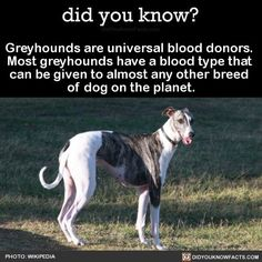 Can Your Pet, Animals Are Beautiful People, Interesting Animals, Interesting Facts, Wtf Fun Facts, Crazy Facts, Animal Facts, Dogs And Puppies, Doggies