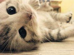 adorable, cat, cute, kitten, kitty  image