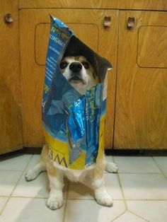 I eat all the treats but can not get out of bag