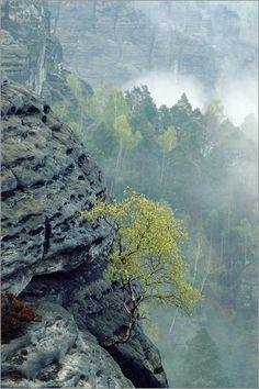 """Bild von Norbert Rosing - """"Sächsische Schweiz, Deutschland"""""""