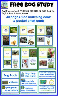 FREE, 40 pages, bog plant and animal matching cards, pocket chart cards, a color page, and work pages to supplement a bog picture book such as BIG BELCHING BOG by Phyllis Root
