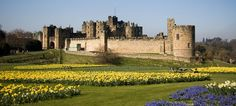 Percy Family Alnwick Castle - One of the most famous and exciting members of the Percy family was Harry ' Hotspur' Percy (1364-1403), whose statue you can see outside Knight's Quest in one of the courtyards of the Castle. — hotelindigonewcastle.co.uk
