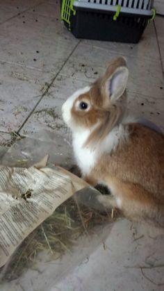Piccola Bunny cerca casa, si trova al nord!
