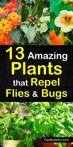 Discover the 13 best plants that repel flies and bugs and enjoy your patio and backyards more this summer. These plants work as a natural pest control method to repel mosquitos and other insects from yards and gardens. - Home Garden Patio Plants, Cool Plants, Outdoor Plants, Nature Plants, Outdoor Gardens, Organic Gardening, Gardening Tips, Organic Farming, Gardening Courses