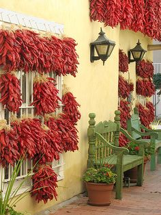 drying chilis, old town, Albuquerque, New Mexico >>> That's a lot of peppers!
