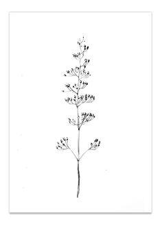 Image of September Flowers #1