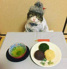 @rinne172 в Instagram: «春分の日/彼岸の中日 #cat#cats#catstagram#catsofinstagram #instacat_meows#instacat_models##猫…»