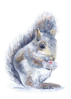 Squirrel Watercolor Note Card Set by SusanWindsor on Etsy, $9.00