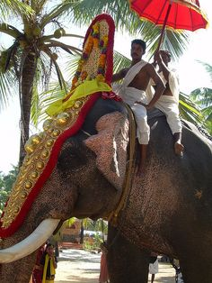 A parade elephant in Kerala, India.