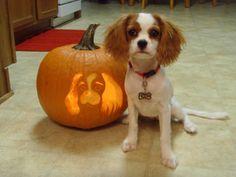 Halloween Cavalier King Charles Spaniel
