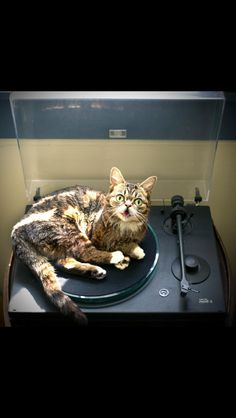 Two turntables and D.J. CATNIP in your mix.