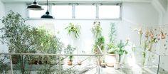 「TODAY'S SPECIAL Jiyugaoka」のエントランスにはバオバブの木が生えています。 店内のコンセプトは「KEEP GREEN」で、グリーンやガーデンコーナーを展開しています。 観葉植物やエアプランツなど、様々な植物を取り扱っています。 ここでは参考にしたくなってしまう素敵植物について紹介していきます。
