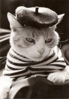 Gato a la francesa, ¡Qué estilo! Esto si que es chic francés: boina y camiseta marinera, o lá lá