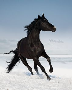 Black Horse was sacred to Triglav and used at his oracles