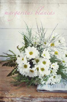 Margaritas blancas, mis flores preferidas.   www.luisamoron.com