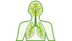 La respiration synchronise le cerveau - Pour la Science