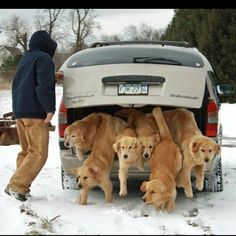 trunk full of puppies - I'll bet it's very hard to hold the car on the road when they all get excited by seeing something.