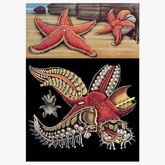 Red Starfish, $156, now featured on Fab.