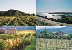 Auckland Wine Tasting & Trail Tour | Physic Tourism