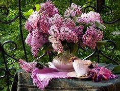 цветы сирени фото-08