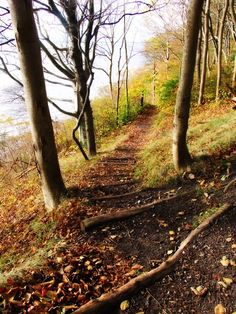 There are so many amazing trails out there for a great workout...go find one!