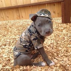 Military pit bull - Tap the pin for the most adorable pawtastic fur baby apparel! You'll love the dog clothes and cat clothes! <3