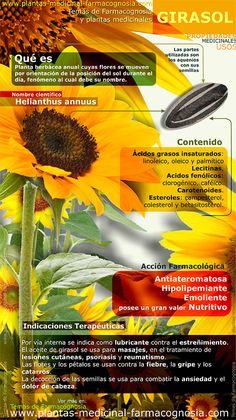 Infografía. Resumen de las características generales de la planta del Girasol. Propiedades, beneficios y usos medicinales más comunes del Girasol (Helianthus annuus) http://www.plantas-medicinal-farmacognosia.com/productos-naturales/girasol/propiedades-infografia/