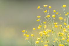 Yellow Flowers by Ole Condrup