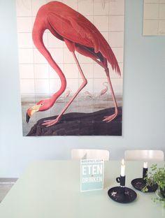Feeling Flamingo #ixxi #mariapaviljoen