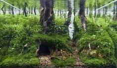 Aquascaping: Beeindruckende Wald-Landschaften unter Wasser