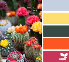 cacti brights - palette to help design around hunter green kitchen counters Colour Pallette, Color Palate, Colour Schemes, Color Combos, Color Patterns, World Of Color, Color Of Life, Cactus, Design Seeds