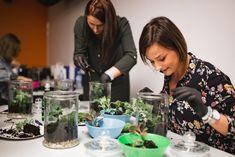 W dzisiejszym wpisie pokazujemy jak samodzielnie zrobić niewymagający opieki mini ekosystem, czyli las w słoiku. Każdą czynność opisujemy krok po kroku! Mini Terrarium, Potted Plants, Harvest, Diy And Crafts, Garden, Dyi, Inspiration, Plants, Flowers