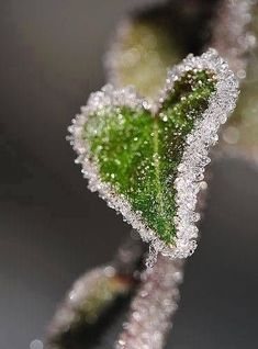 Hearts in Nature / Bokeh / Winter / frost-edged green leaf. Heart In Nature, Heart Art, I Love Heart, Happy Heart, Lonely Heart, Crazy Heart, Foto Macro, Love Symbols, Love Is All