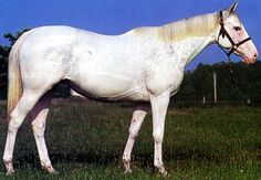 Dominant White Thoroughbred 'Artic Color' filly from Puchilingui