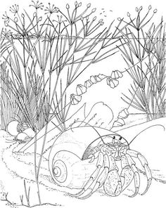 Printable Adult Coloring Page Beach Coloring Pages, Printable Adult Coloring Pages, Animal Coloring Pages, Coloring Book Pages, Coloring Pages For Kids, Coloring Sheets, To Color, Colorful Pictures, Drawings