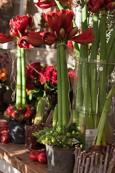 Amaryllis display - Inside Zita Elze's beautiful florist shop in Kew -December 2012 - via www.flowerona.com