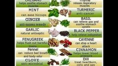 Healing herbs and spices. Oregano mint ginger garlic fenugreek clove fennel sage rosemary dill cinnamon cayenne black pepper basil turmeric thyme (spices and herbs benefits) Remedies For Nausea, Herbal Remedies, Health Remedies, Home Remedies, Healing Herbs, Medicinal Herbs, Ayurvedic Herbs, Herbs For Health, Health Tips