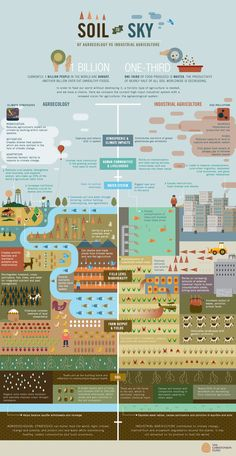 How to feed the world without destroying it [Infographic] | MNN - Mother Nature Network
