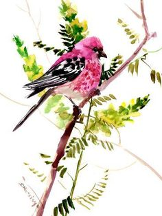 Giclee Print: House Finch 2 by Suren Nersisyan : Watercolor Bird, Watercolor Illustration, Watercolor Paintings, Watercolors, Bird Drawings, Animal Drawings, Colored Pencil Techniques, Bird Artwork, Space Gallery