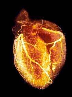 il cuore primitivo