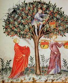 Tacuinum Sanitatis - codex Vindobonensis - fin XIVè - Italie, Bibl. nationale de Vienne