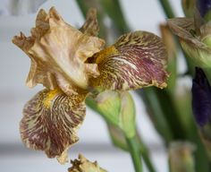 www.floramama.ca l Photo:Stéphane Cocke Bouquet, Nature, Plants, Most Beautiful Flowers, June, Bouquets, Flora, Plant, The Great Outdoors